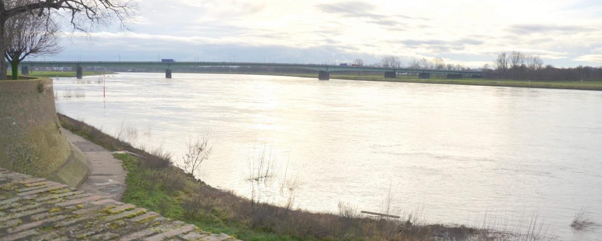 Sicht über den Rhein 6