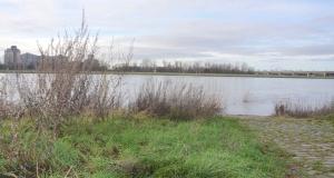 Sicht Über Den Rhein 2